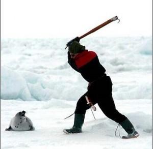 matanza-focas