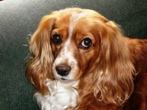 Mía vive en Bogotá y exige que cuiden a las mascotas como a ella la aman sus padres humanos