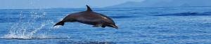 banner-delfin.jpg