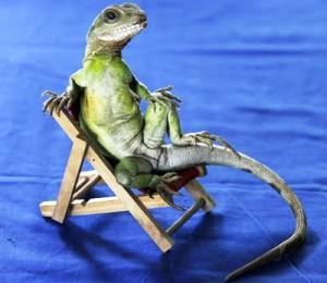 Aqui este simpatico dragón de agua tomando el sol