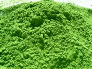 La espirulina, alga nutricional al servicio de la humanidad