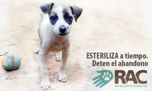 Red de apoyo canino7