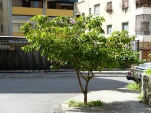 Flor de la Reina plantada por el vecino Javier en Las Acacias.Foto Yrama Capote