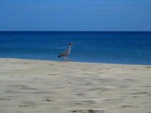 Isla de Margarita, foto cortesía María Helena Bellorín