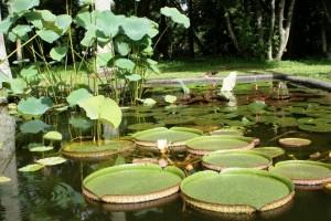 Laguna Venezuela del Jardín Botánico