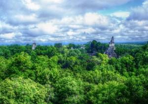 Selva Maya, foto cortesía Fernando Reyes