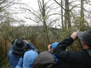 birding-along-the-Netul-River-Trail-Great-Backyard-Bird-Count-16-1024x768