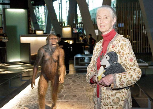 la-dra-jane-goodall-celebre-primatologa-anglesa-reconeguda-pels-seus-revolucionaris-estudis-a-les-selves-de-tanzania-compa1