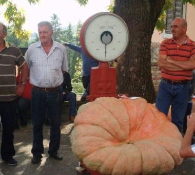 Calabaza de 250 kgs