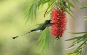 Colibri. Foto Edglorys Marys