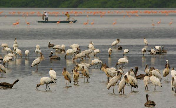 Laguna de Unare, foto cortesía Siempre Verde Venezuela