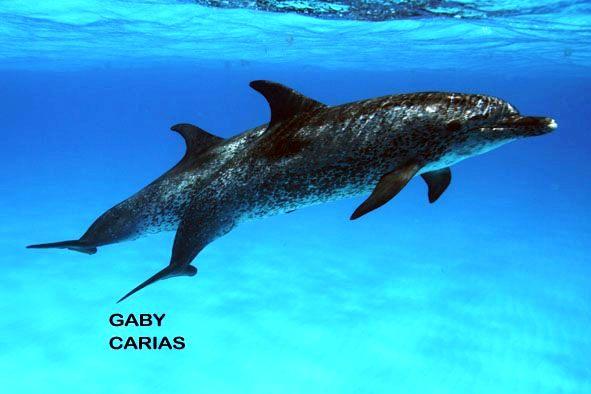 Foto Gaby Carias