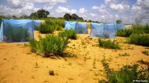 Planeta Vital: sacos de cafe para suelos