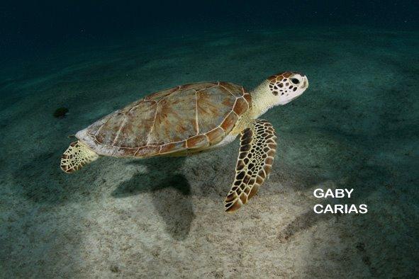 Foto: Gaby Carias