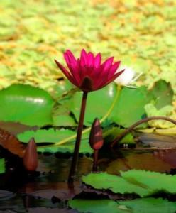Primavera en el Jardín Botánico de Maracaibo