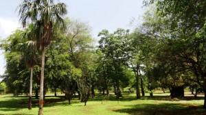 Foto Recorre el área de árboles de corteza ornamental. Conoce las Sibucaras, Cabimas y el BaoBab