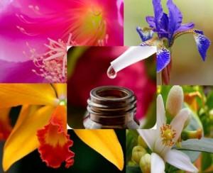 Las esencias florales van directo a las emociones