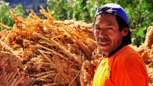 Los pequeños productores deben tener la prioridad. Foto: http://quinua.pe/agricultores/