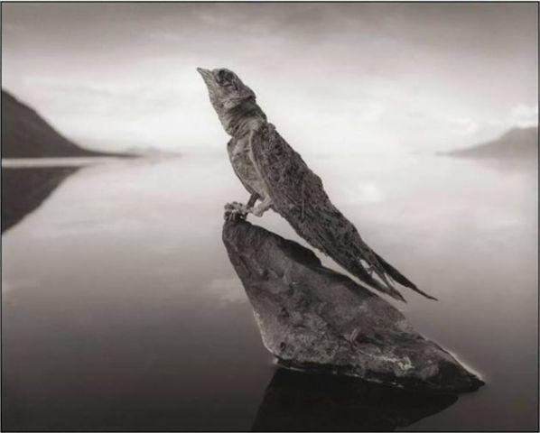 El Lago que convierte en fósiles a los animales que lo visitan. Foto Nick Brandt