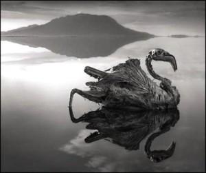 Estos animales no han muerto a causa del lago en sí, sino que simplemente se petrificaron y conservaron por estos compuestos