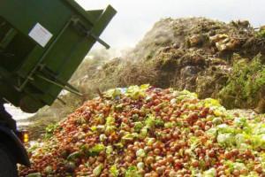 Montañas de alimentos son desechados mientras millones de personas padecen de hambre