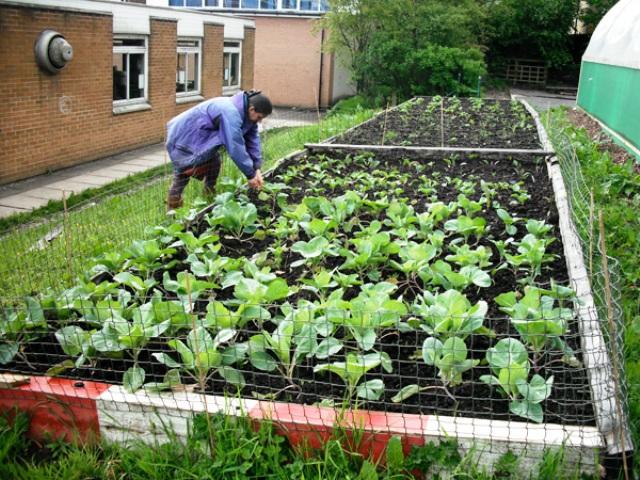 Vecinos y turistas tienen libre acceso a los cultivos