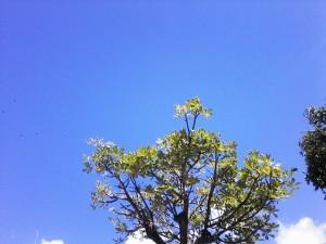 Cielo azul de Caracas en diciembre. Foto Marisela Valero