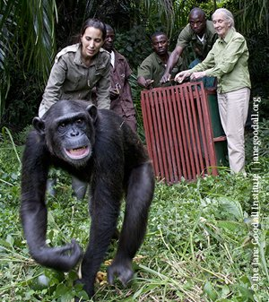 Jane Goodall y Rebeca Atencia acompañan todo el proceso de liberación