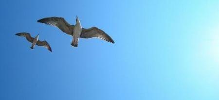 albatross-7584_450x206
