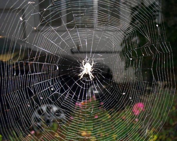 Todo jardín tiene su tela de araña