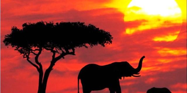 Protección para los elefantes en el parque nacional de Maasai Mara, Kenya