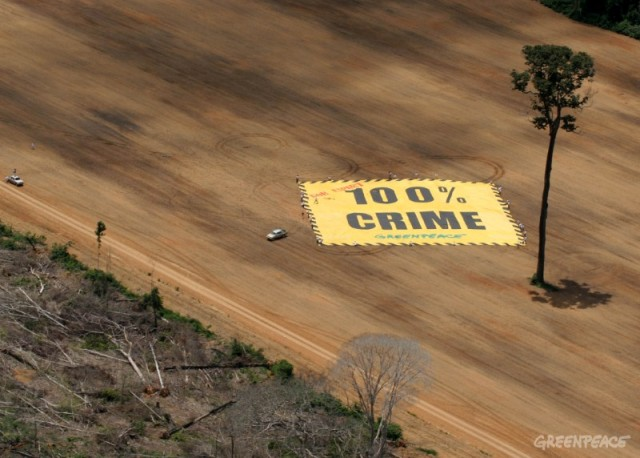 Terrible crimen a la humanidad.Foto Greenpeace