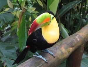Proteger las especies y la biodiversidad en Brasil 2014