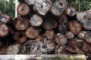 Tala indiscriminada del pulmón vegetal del mundo. Foto Greenpeace