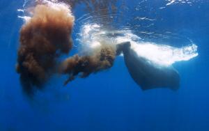 Ballenas defecando