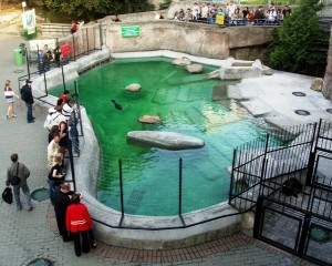 Piscina de leones marinos del Zoo de Moscú