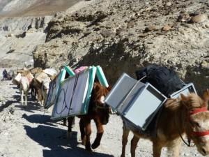 mulas transportan paneles solares en La India