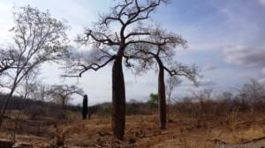 La deforestación no perdona la Amazonia. Foto Nuevo Herald