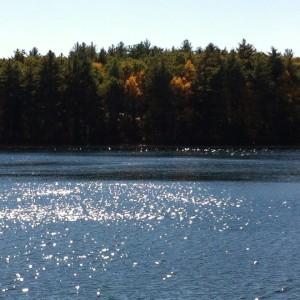 Walden Pond, Massachusetts, Foto Planeta Vital