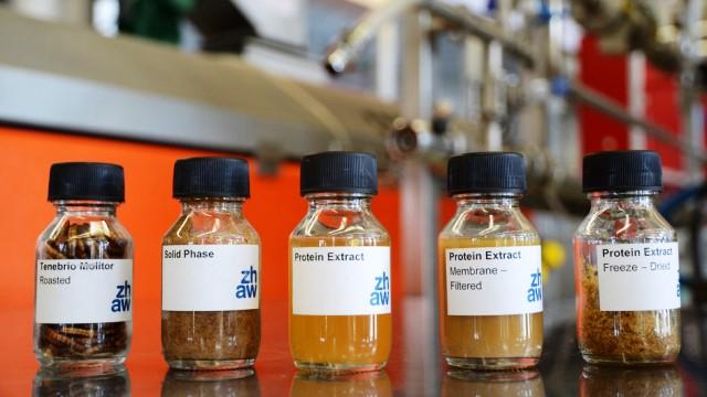 El trabajo de laboratorio - desde el gusano a los gránulos: De izquierda: gusanos de la harina, los sólidos separados, proteína disuelta, albúmina filtrada, proteína liofilizada. Foto NORBERT RAABE