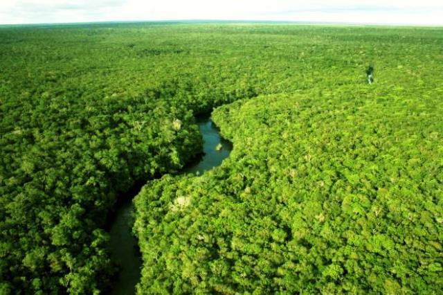 Parte de la selva amazónica en Brasil. Foto: cromo.com.uy