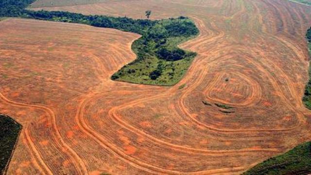 Deforestacion en Selva Amazonica.www.bbc.co.uk