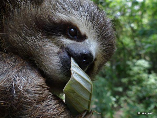 Aprendiendo a comer. Foto Luis Eduard Levin
