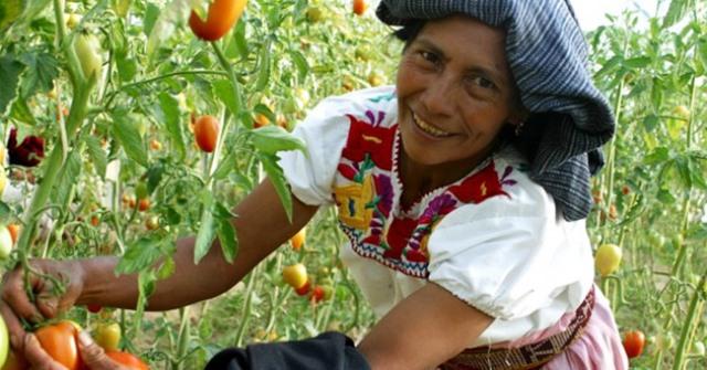 La reforma agraria mexicana devolvió su tierra a los indígenas. Foto:www.aztecanoticias.com.mx