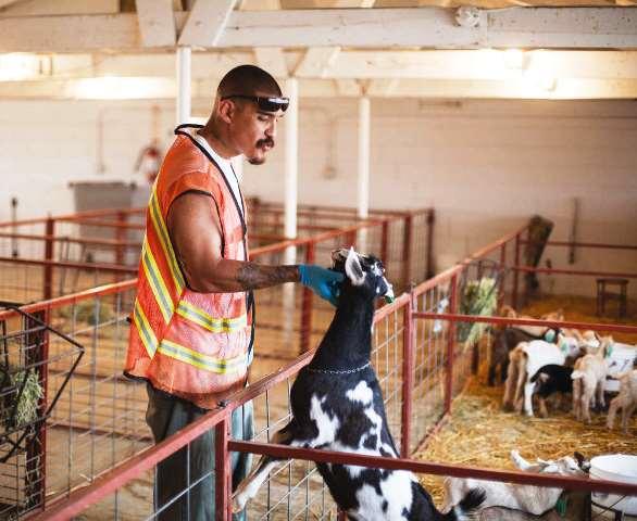 El cuidado de los animales está a cargo de los  reclusos con buen comportamiento