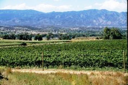 La Colorado Correctional Industries (CCI) dispone de viñas donde trabajan numerosos detenidos.