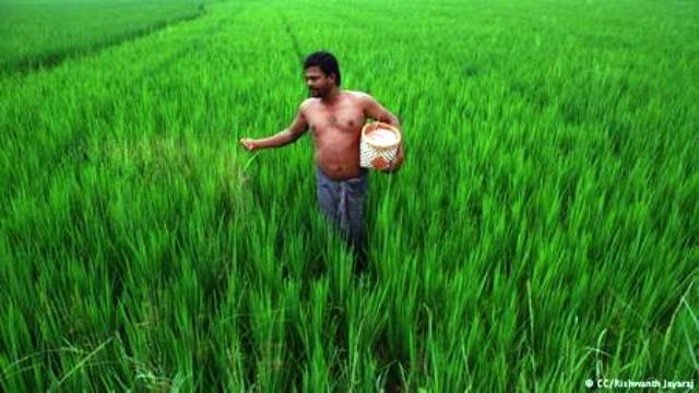 Sumant Kumar el padre del arroz
