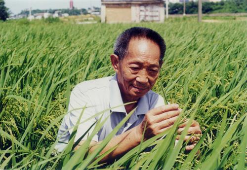 Yuan Longping científico agrícola