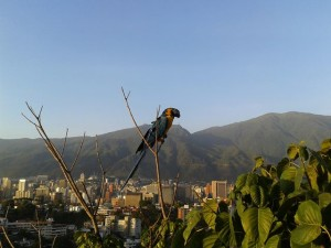 Guacamaya. Foto Nidia Hernández