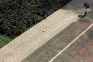 Brasil, un tractor siembra trigo en lo que era un bosque amazónico